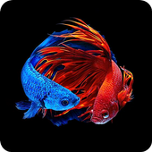 斗鱼动态壁纸3D---安卓手机下载