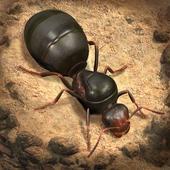 小小蚁国---安卓手机下载